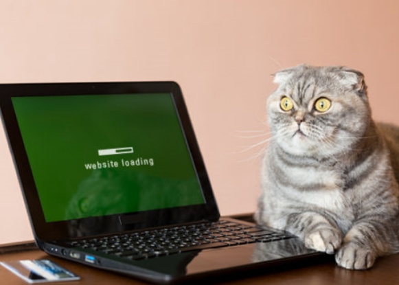 Cat waiting for website to load